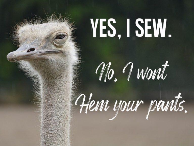ostrich-4504017_1280