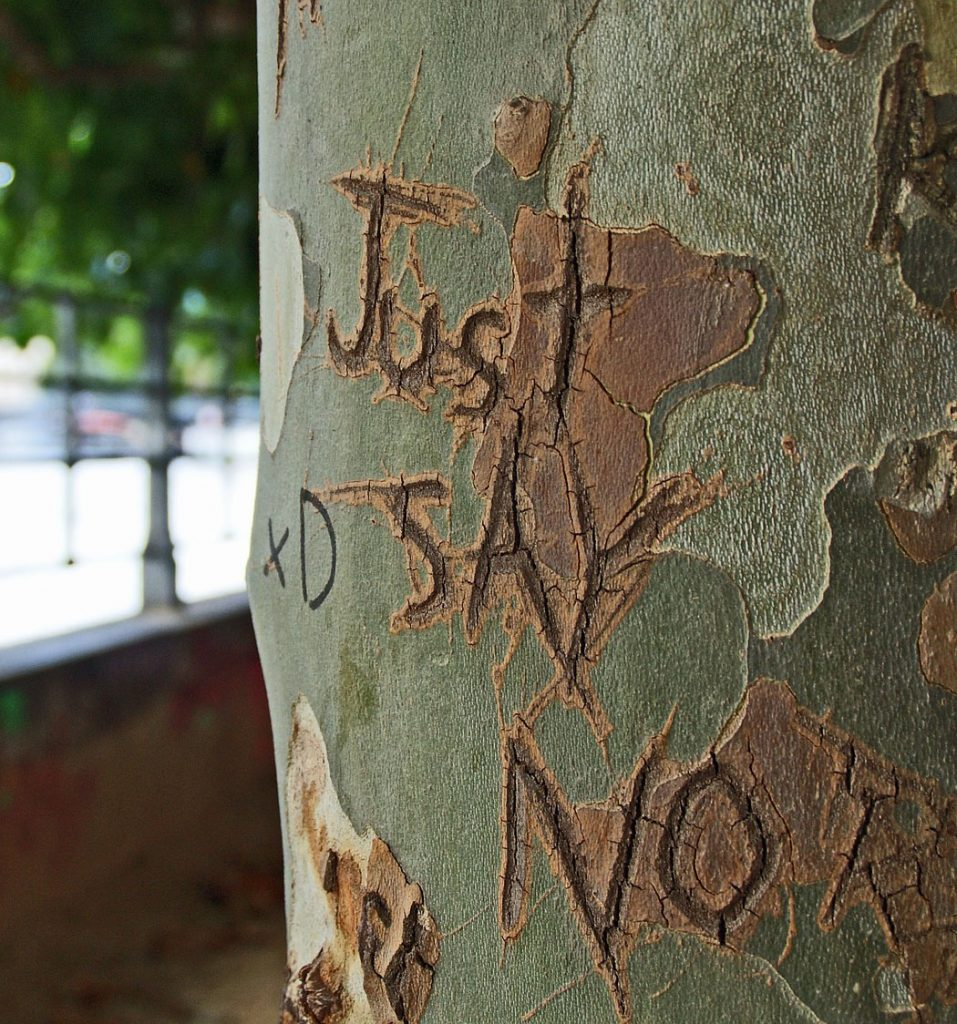 Just Say No carved on tree.